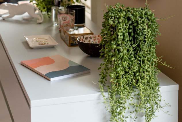 Succulentes plantes intérieur