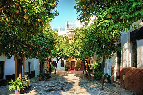 Orangers de Séville - barrio de Santa Cruz