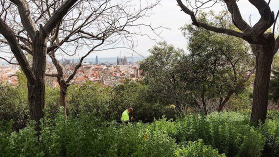 Les espaces verts de Barcelone